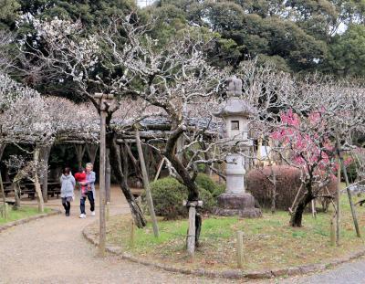成田市散策(8)・・成田山公園と梅まつりを訪ねます。