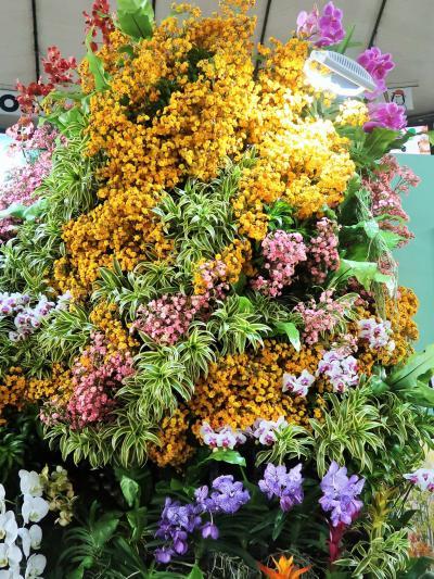 世界らん展22 沖縄発 〈ちゅらら〉 新しい花に期待 ☆〔美ら海水族館〕の癒しも体感
