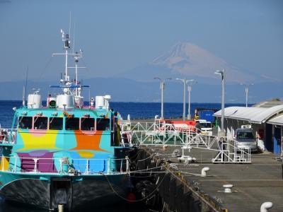 東京セブンアイランド・椿咲く冬の伊豆大島