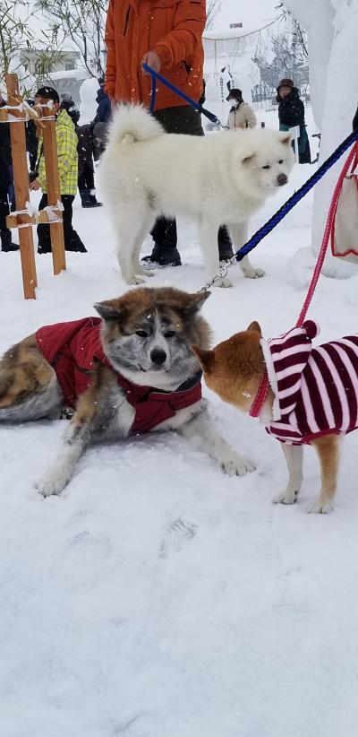 ふらっと秋田へ犬っこ祭り!! 2日目