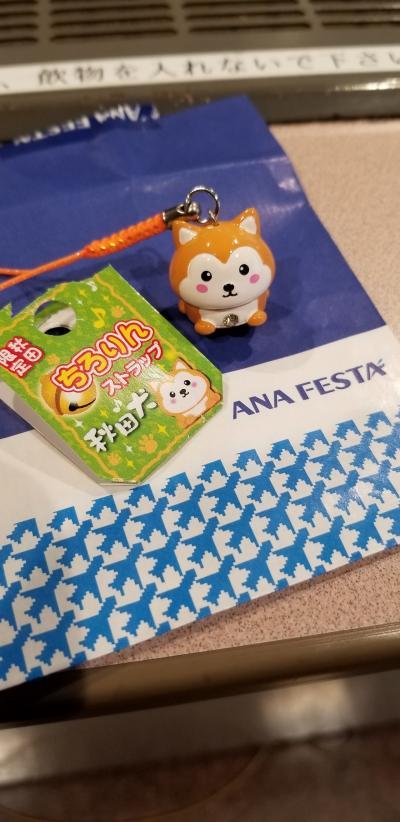 ふらっと秋田へ犬っこ祭り!! 3日目