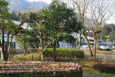 花蓮公園と杣山