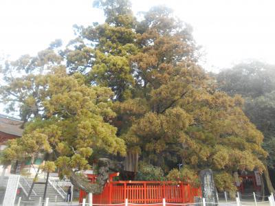 福岡散歩①東区編 愛が眠る宮から愛が育つ街へ