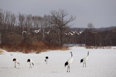 2019 冬の北海道、道東旅~ 1日目。
