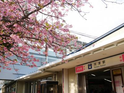 JRお得きっぷで行く河津桜1泊2日 1日目- 2019.3