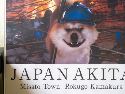 秋田 大館 : 秋田犬会館の秋田犬に会う