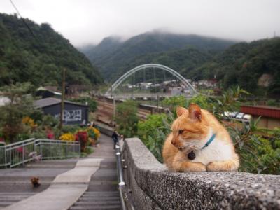初めての海外一人旅 2泊4日の台湾旅行[3]台湾で絶対行きたかった猴トン猫村、可愛いねこたちに癒されてきました