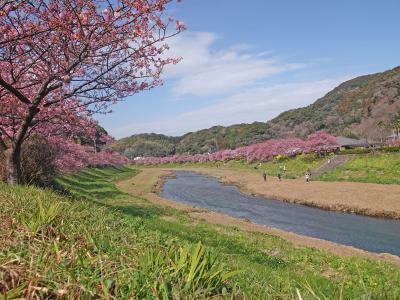 南伊豆へ 2019.02.11 =その3-1・青野川沿いに河津桜を見ながらウォーキング=