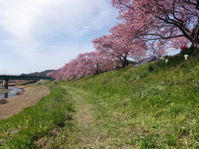 南伊豆へ 2019.02.11 =その3-2・青野川沿いに河津桜を見ながらウォーキング=