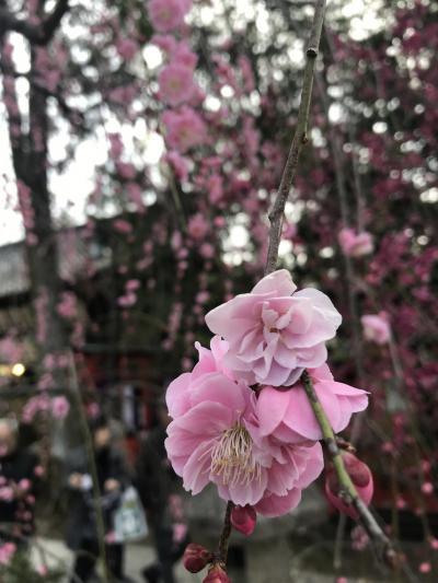 早春の京都を楽しむ