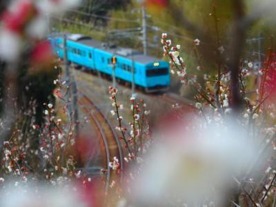 【和歌山】 みなべ梅林と鉄道