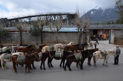 日本人に会わない旅 中国(その1)3つの世界遺産を持つ町「麗江」