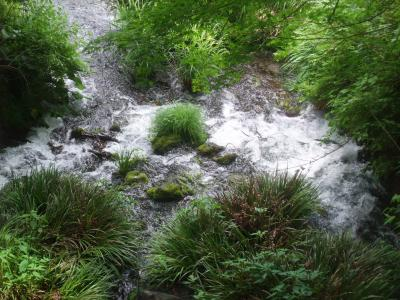 熊本・阿蘇の恵み 「自然豊かな温泉と名水を訪ねる旅」