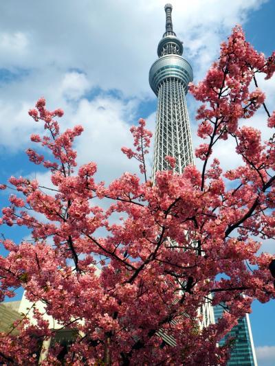 東京観光day🗼