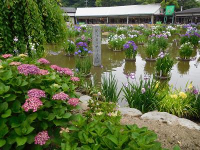2018年6月 福岡・大宰府 九州国立博物館で印象派展鑑賞。天満宮で菖蒲・紫陽花を楽しむ