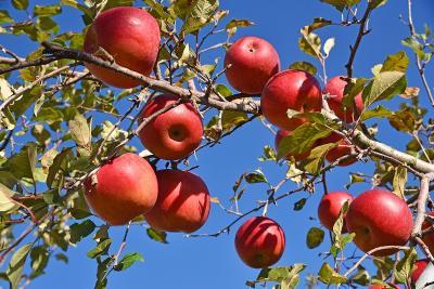 毎年恒例のりんご狩り(信州佐久)への寄り道で長瀞・軽井沢へ
