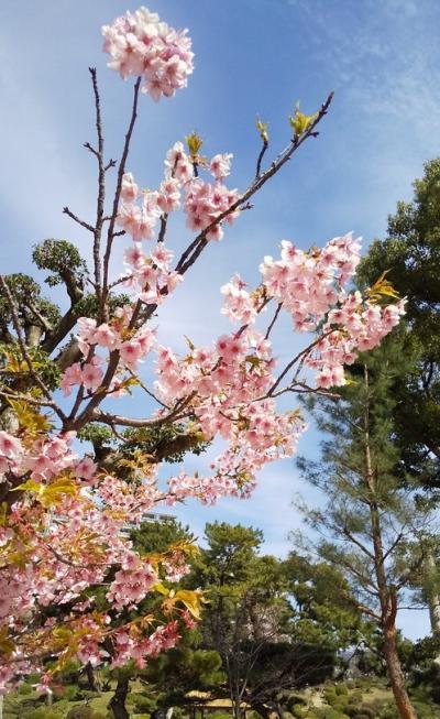 春めくひろしま花巡り~縮景園~