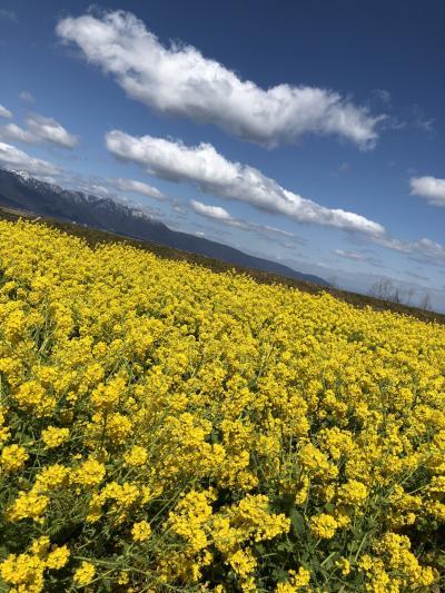 琵琶湖ときめき旅行!…菜の花畑と大衆演劇を鑑賞…ひとり旅編!