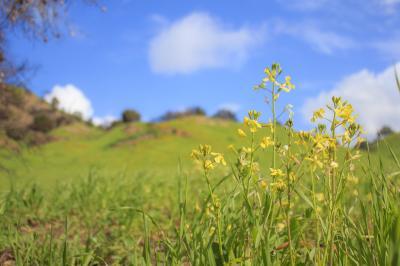 マリブ・クリーク州立公園でお花見?