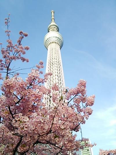 スカイツリーと桜の共演