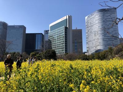 築地、銀座、汐留で春の散歩。