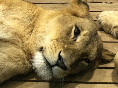 2019年3月 大人の遠足#39 よこはま動物園ズーラシア