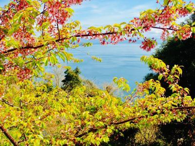 愛媛縦走2019~春を探しに。でも松山市内観光はないんです~