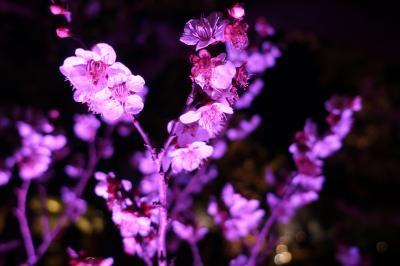 【2019国内】日帰り水戸。偕楽園の梅まつりで夜梅を楽しむ。