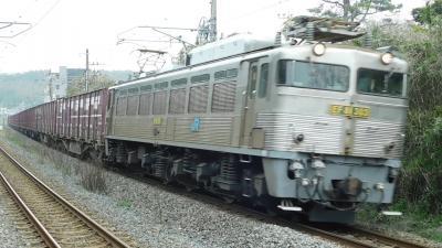 2019所用のついで貨物列車。EF81-303を見に行こう!