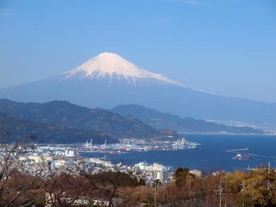 清水魚市場 河岸の市でマグロ三昧!日本平動物園のかわいいレッサーパンダ 日本平夢テラスから富士山を見よう