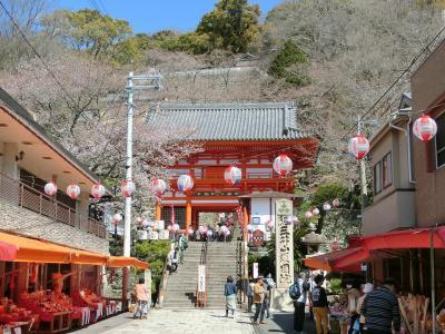 紀三井寺桜、みさき公園