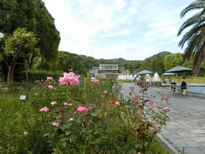 須磨離宮公園バラ、六甲カンツリーハウス