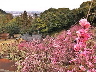 大縣神社の梅林に行きました