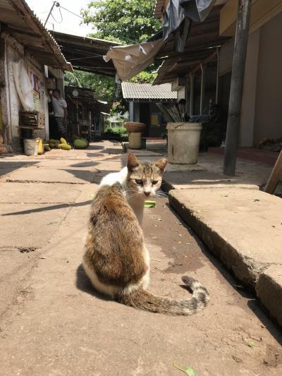 「豹が見たい!」ただその一念でスリランカへ(*^o^*)しかーし!スリランカはヒョウだけじゃ無かった!そこは猫の楽園だったよ(笑)スリランカ初上陸⑧最終日はコロンボで遊んでじゃおぉー