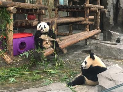 2019ジャイアントパンダ鑑賞記録 はじめての海外完全一人旅☆上海野生動物園へ行ってきました1