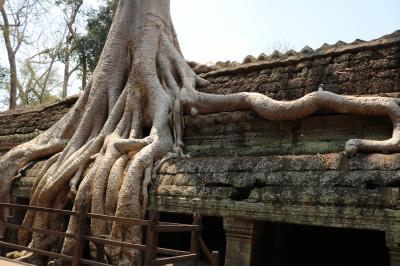 楽しかった夫の退職記念家族旅行カンボジア&ハノイ、帰国当日に茫然自失(泣2)