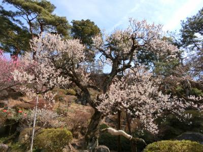 山梨へ! その2 梅の花見に「不老園」へ。PART1 綺麗だったー!