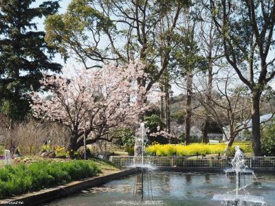 早咲きの桜を愛でに@大船フラワーセンター