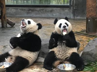 2019ジャイアントパンダ鑑賞記録 はじめての海外完全一人旅☆上海野生動物園に行ってきました2