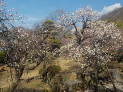 山梨へ! その3 梅の花見に「不老園」へ。PART2 日本庭園も見応えがありました。