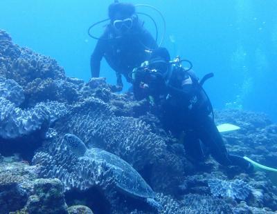 石垣島2019春(5) 石垣島ダイビング・幻の島&マンタシティだけどカメ三昧