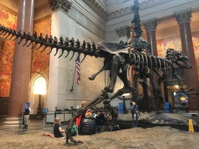 2019 真冬のニューヨークへ行ってきました3~セントラルパーク・自然史博物館・メトロポリタン美術館・アラジン・タイムズスクエア~