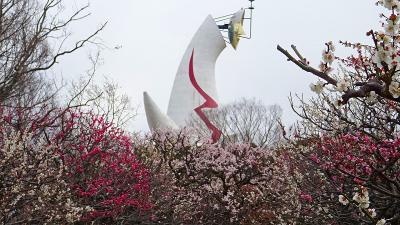 万博公園へ梅林を見に行きました(3) 自然文化園の梅林を見学。