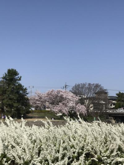 2018年 春の京都と神戸の旅