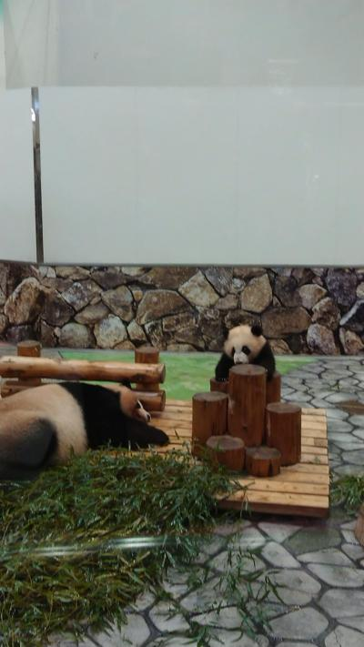 犬連れ家族旅 パンダに再会和歌山1泊2日の旅