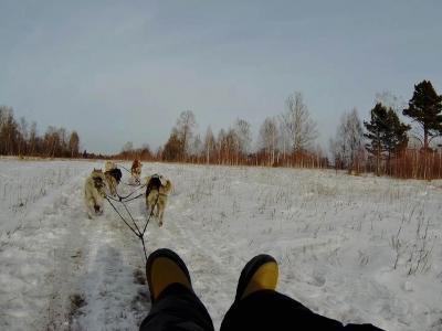 シベリアで青い氷を見る旅 #4【犬ぞり編】