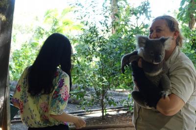 カンタス航空ビジネスクラスで行くオーストラリア。ブリスベン、ゴールドコーストのカランビン動物園でコアラ抱っことカンガルー編