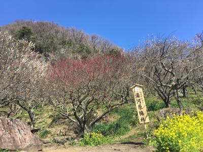 2019年3月 大人の遠足#40 湯河原幕山梅林