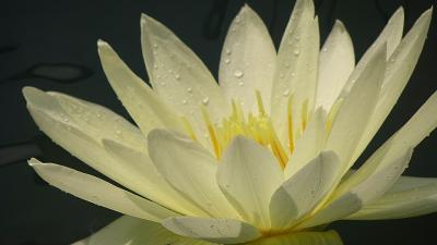 花博記念公園鶴見緑地(01) 入園し咲くやこの花館 その1。