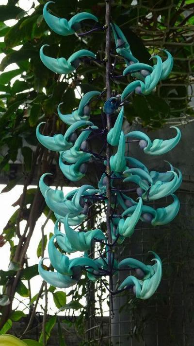 花博記念公園鶴見緑地(03) 咲くやこの花館 その3。